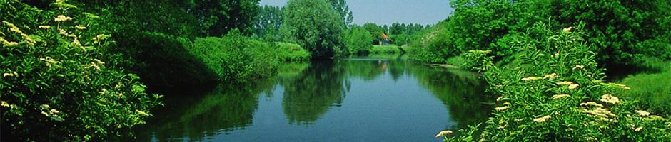 Natur pur ved floden Schelde i Flandern / Belgien