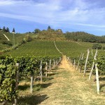 Vinmarker i Piemonte på cykelferien